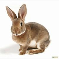 Комбикорм и премикс для кролей (с пробиотиком)