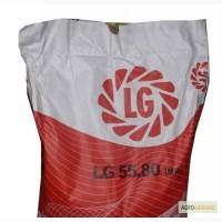 Семена подсолнечника Limagrain LG 5580