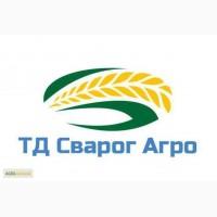 НС Ромео Сербский гибрид толерантен к стрессовым условиям выращивания