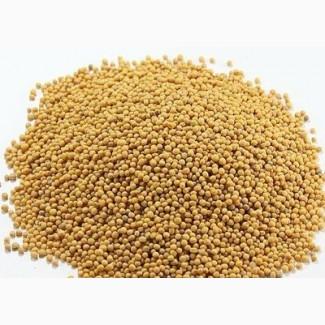 Горчица БЕЛАЯ посевная/семена