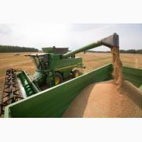 Закупаем зерновые культуры (цены уточняйте)