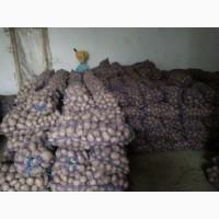 Продам картоплю різних сортів. Урожай 2018