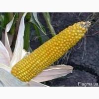 Посевной материал Кукуруза Биг Стар (Евралис)