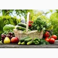 Сотрудничество с оптовиками продать овощи