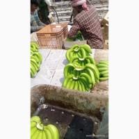 Продам бананы от Эквадорского поставщика