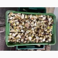 Продаємо білі гриби (заморожені, сушені, мариновані)