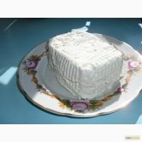 Сыр козий рикотта самый целебный, вкусный и сладкий в Украине