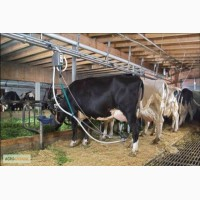 Комплектующие механического доения для ферм КРС