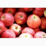 Плановые закупки яблок расных сортов