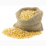 Куплю ЗЕРНОВЫЕ: пшеницу, кукурузу и др