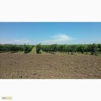 Продам виноградники в Одесской обл