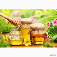 Куплю мед оптом: чистая гречка, липа, кориандр