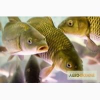Комбикорм для рыбы