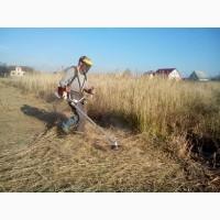 Покос травы цена за сотку