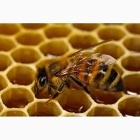 Закуповуємо натуральний мед