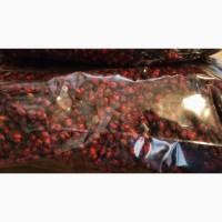 Продам ягоды лимонника китайского