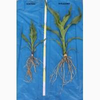 Биопрепарат (Биоудобрение) Филазонит - находка для агрономов