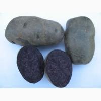 Продам товарну картоплю сорту Солоха, Хортиця