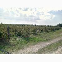 Продаю діючий готовий бізнес, сад - поле висаджене малиною, Винницкая обл