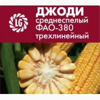 Силосный гибрид кукурузы Limagrain Джоди среднеспелый ФАО-380 трехлинейный
