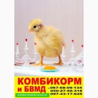 Бройлеры, цыплята на Крытом рынке и Анголенко