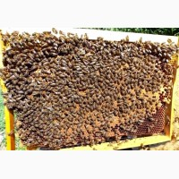Продам бджолопакети Карпатка 2019