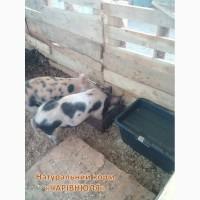 Еко-корм «Чарівнюля» для свиней, ВРХ та курей
