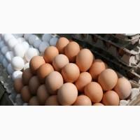 Продам Куриные Яйца Оптом оптом