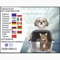 Тест на бешенство Справка собаки выезд за границу Официально ветпаспорт