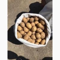 Продам посадочный картофель отличного качества.10 сортов.Нал/Без.НДС