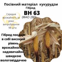 Посівний матеріал кукурудзи гібрид - ВН 63