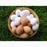 Курячі яйця свіжі С0, С1 на експорт ( export fresh eggs )