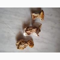 Білий гриб сухий цілий