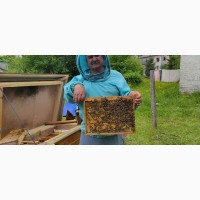 Продам бджолопакети
