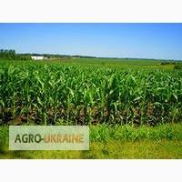 Cемена кукурузы Оржиця 237 МВ