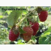 Сорт малины гордость россии, АННЭ, Брусвяна, Геракл, Краса Росии