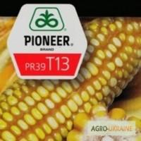 Семена кукурузы Пионер ПР39Т13
