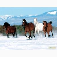 Куплю коней черниговская облость и сумская