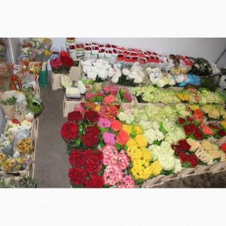 Цвети из Голландии, Еквадора, отечественние