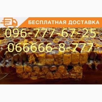 Перга. Пчелиный хлеб. Бесплатная Доставка. Хлебина из цветков лечебных трав