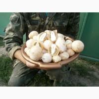 Продам Настойку гриба весёлки