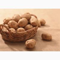 Продам картоплю Закарпаття (Картопля з Волині)
