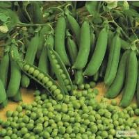 Продать семена Горох (Посевмат, посевной материал гороха)
