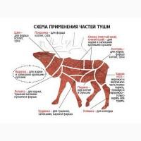 Продам мясо дичь
