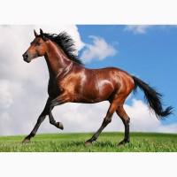 Куплю лошадей упитанных