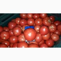Продам помидор тепличный розовых сортов