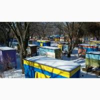 Продам 50 пчелосемей Украинской степной