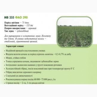 Насiння кукурудзи МВ 355 (ФАО 390) ДЦ Академії Наук Угорщини м.Мартонваша