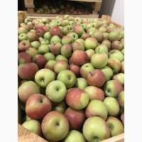 Продаємо газовані яблука з холодильника-сортів.Грені Сміт, Голден Делішес, Фуджі, Ред Чіф