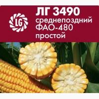 Силосный гибрид кукурузы Limagrain ЛГ 3490 среднепоздний ФАО-480 простой